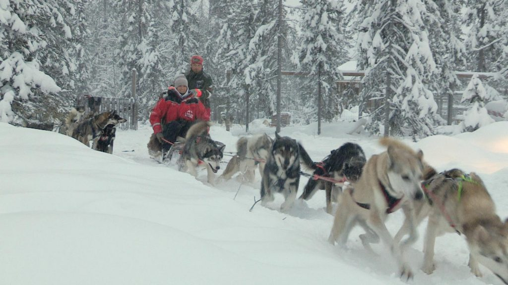 Some huskies pulling a sled with a person on it